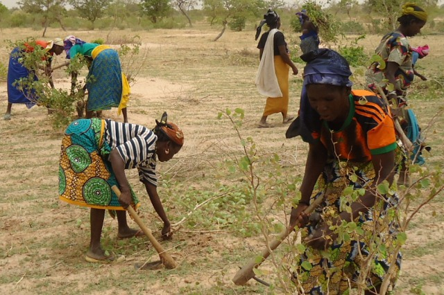 Women's land rights in Maradi, Niger