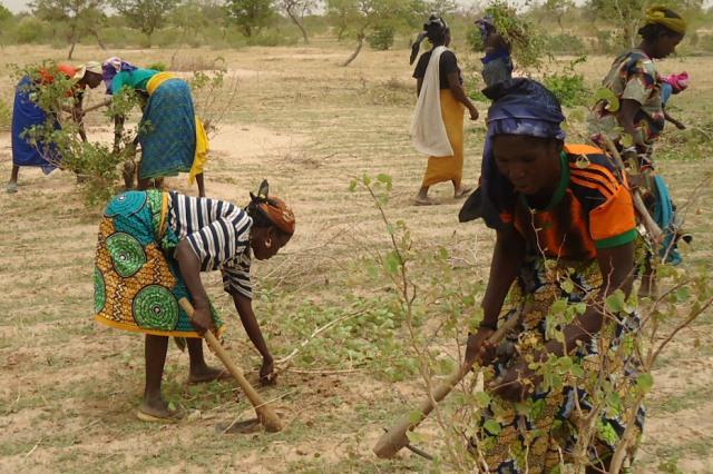 Women's land rights in Maradi, Niger