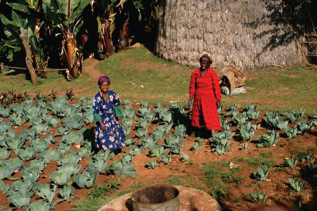 Partnerships for climate-resilient sustainable development