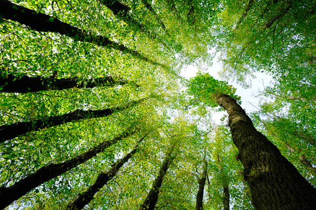 Protecting People, Forests, Water and Climate Change: Setting the Stage for Real Solutions