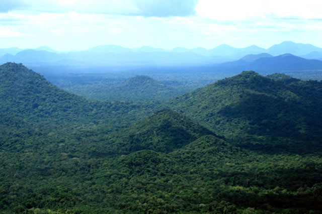 Pursuing REDD+ as a viable development option: Lessons from Guyana's experience